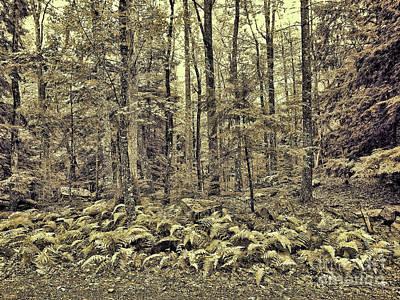 Photograph - Sepia Landscape by Jeff Breiman