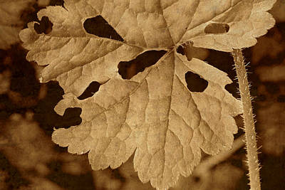Sepia Leaf Art Print by Bonnie Bruno