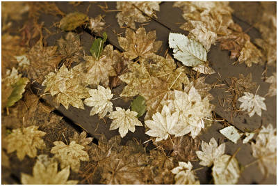Photograph - Sepia Leaves by Bonnie Bruno