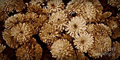 Photograph - Sepia Mums by Patricia Strand