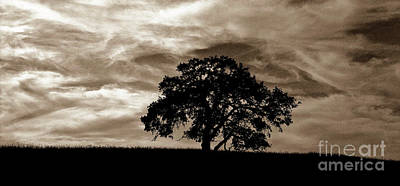 Photograph - Sepia Oak II by Jim And Emily Bush