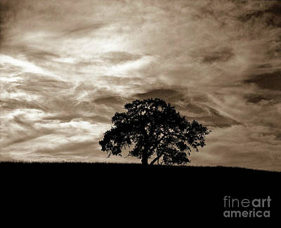 Photograph - Sepia Oak by Jim And Emily Bush