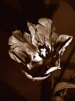 Sepia Quad Tone Parrot Tulip Print by Elaine Plesser