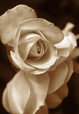 Roses Royalty-Free and Rights-Managed Images - Sepia Rose Petals by Jennie Marie Schell