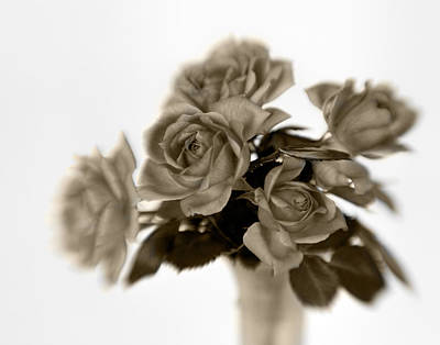 Photograph - Sepia Roses by David and Carol Kelly