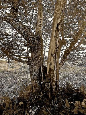 Sepia Series - Cleft Tree Art Print