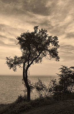 Photograph - Sepia Silhouette by Shari Jardina