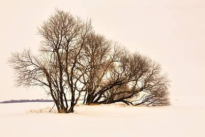 Photograph - Sepia Silhouettes  by David Matthews