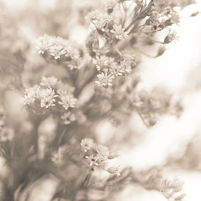 Photograph - Sepia Solidago 2 by Anne Gilbert