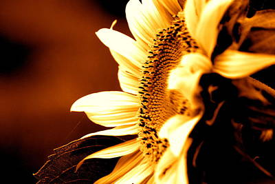 Sunflower Photograph - Sepia Sunflower by Emily Stauring
