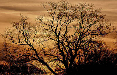 Photograph - Sepia Sunset by Michael Nowotny