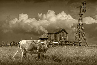 Photograph - Sepia Tone Of A Longhorn Steer In A Prairie Pasture by Randall Nyhof