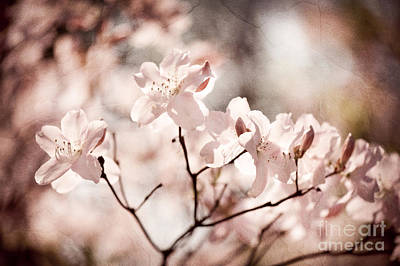 Sepia Toned Rhododendron Called Azalea Flowers  Art Print by Arletta Cwalina
