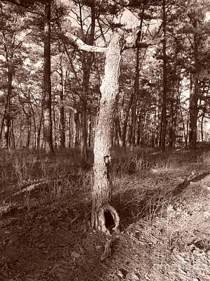 Sepia Tree In The Pines 1 Original