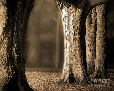 Photograph - Sepia Trees Afternoon Light by Hal Halli