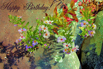 Photograph - September Birthday Aster by Kristin Elmquist