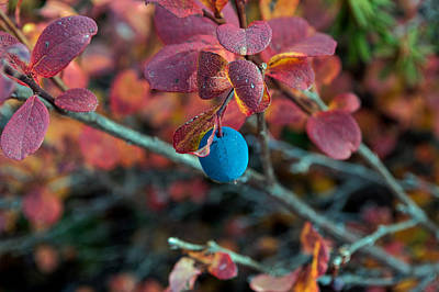 Photograph - September Blueberry by Cathy Mahnke