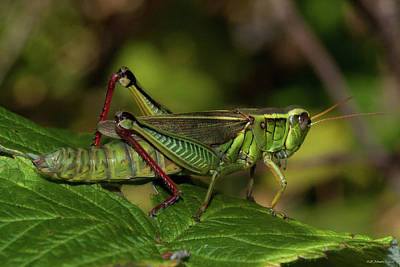 Photograph - September Grasshopper by WB Johnston