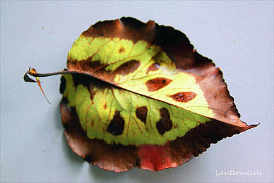 Photograph - September Leaf by John Lautermilch