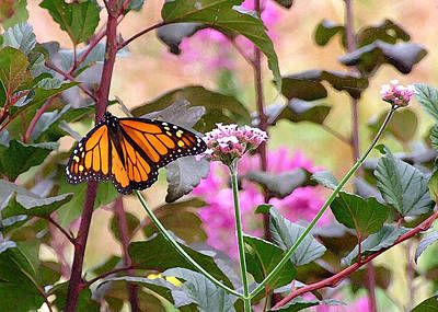 Photograph - September Monarch by Janis Nussbaum Senungetuk