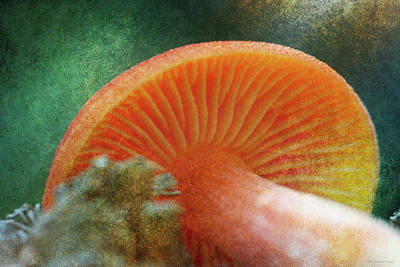Photograph - September Mushroom by WB Johnston