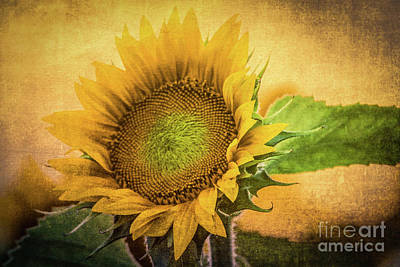 Photograph - September Sun by Lynn Sprowl