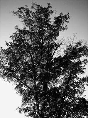 Photograph - September Tree ... by Juergen Weiss