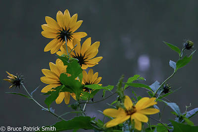 Photograph - September Wildflowers by Bruce Patrick Smith