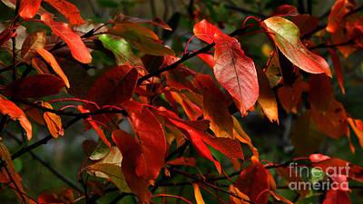 Photograph - Septembers Veil by Janice Westerberg