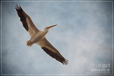 Photograph - Sepulveda Crane 2 by Scott Parker