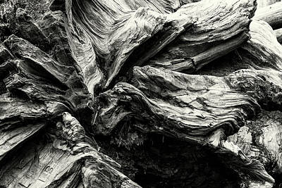 Photograph - Sequoia Abstract, No. 1 Bw by Belinda Greb