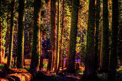 Photograph - Sequoia Grove Along Crescent Meadow Trail by Roger Passman