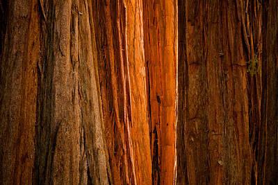Tree Photograph - Sequoia Light by Thorsten Scheuermann