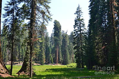 Photograph - Sequoia National Forest by Laurianna Taylor