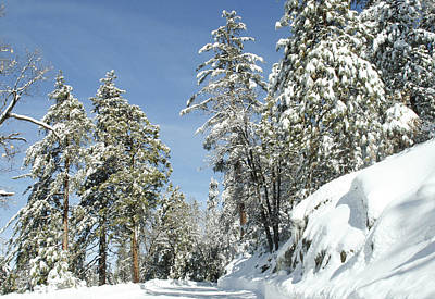 Photograph - Sequoia National Park 3 by Masha Batkova