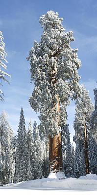 Photograph - Sequoia National Park 6 by Masha Batkova