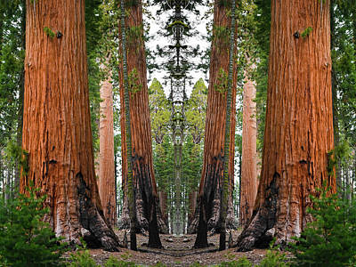 Photograph - Sequoia National Park Mirror by Kyle Hanson