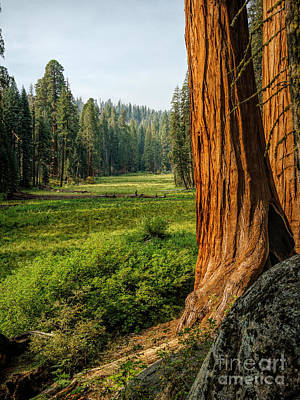 Sequoia Np Crescent Meadows Art Print