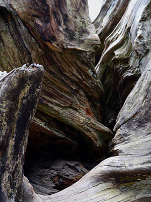 Photograph - Sequoia Roots by Pic Michel
