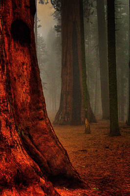 Photograph - Sequoias In The Clouds by Roger Passman