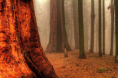 Photograph - Sequoias Touching The Clouds by Roger Passman