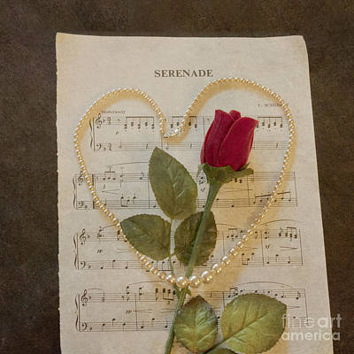 Photograph - Serenade by Terri Waters
