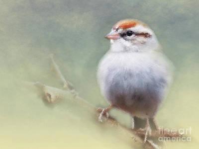 Serendipitous Sparrow  Art Print