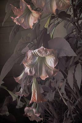 Photograph - Filoli Serendipity  by Patricia Dennis