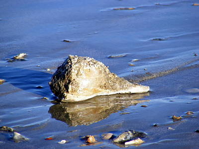 Conch Photograph - Serene Conch Shell At Isle Of Palms by Elena Tudor
