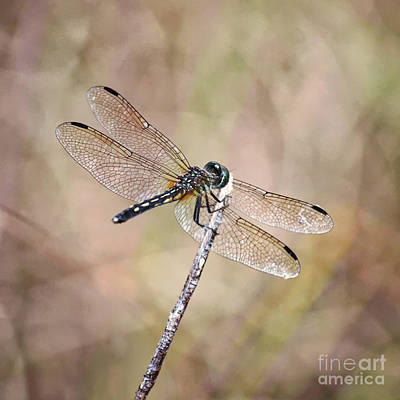 Photograph - Serene Dragonfly Square by Carol Groenen