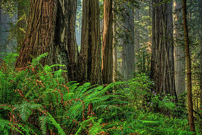 Photograph - Serene Forest 2014 by Ralph Nordstrom