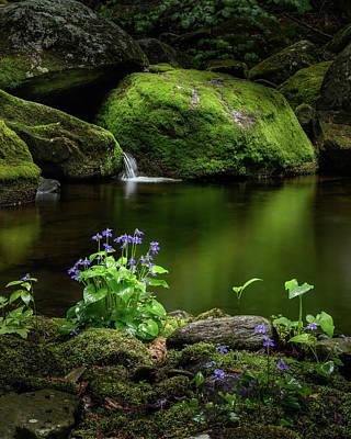 Mountain Stream Photograph - Serene Green by Bill Wakeley