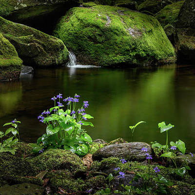 Woodland Violet Photograph - Serene Green Square by Bill Wakeley