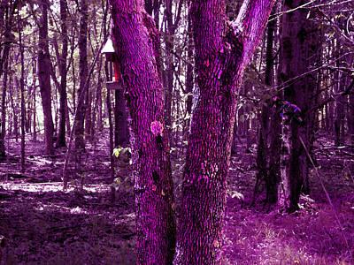 Photograph - Serene In Purple by Michelle Audas